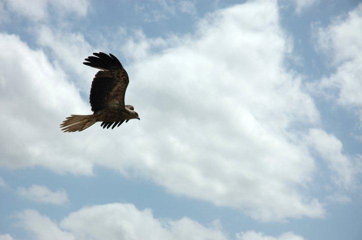 eagle-1316043